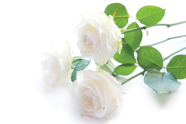 Funeral flower arrangement Dignity Funerals