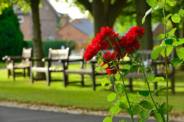 Garden memorial benches Dignity Funerals