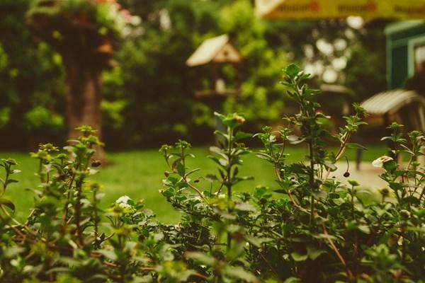 Bury ashes in garden
