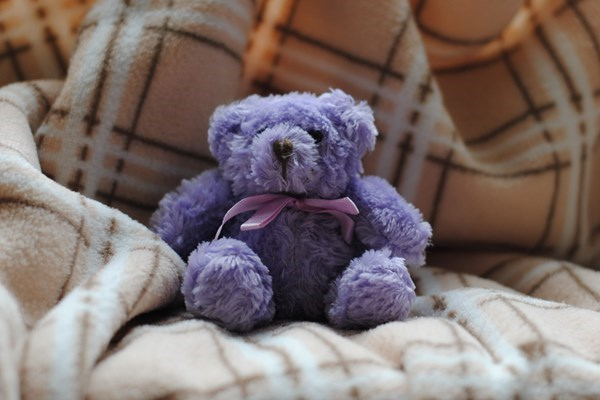 Ashes cuddly toy